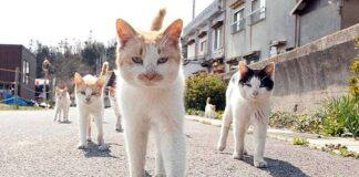 кошачья банда. Главные новости Украины сегодня без цензуры