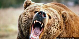 медведь. Главные новости Украины сегодня без цензуры