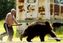 мужик гонит медведя. Главные новости сегодня