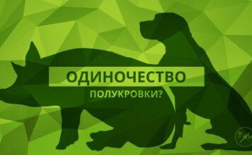 Одиночество свинособаки. Главные новости Украины сегодня без цензуры