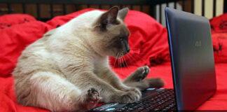 Кот и ноутбук. Главные новости Украины сегодня без цензуры