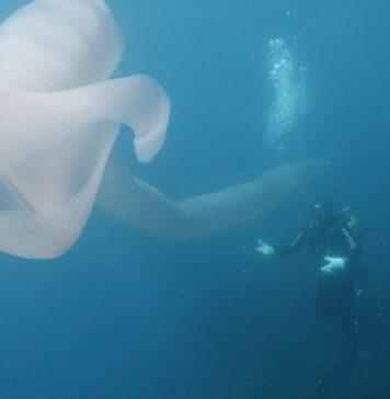 Гигантский океанский червяк. Главные новости Украины сегодня без цензуры